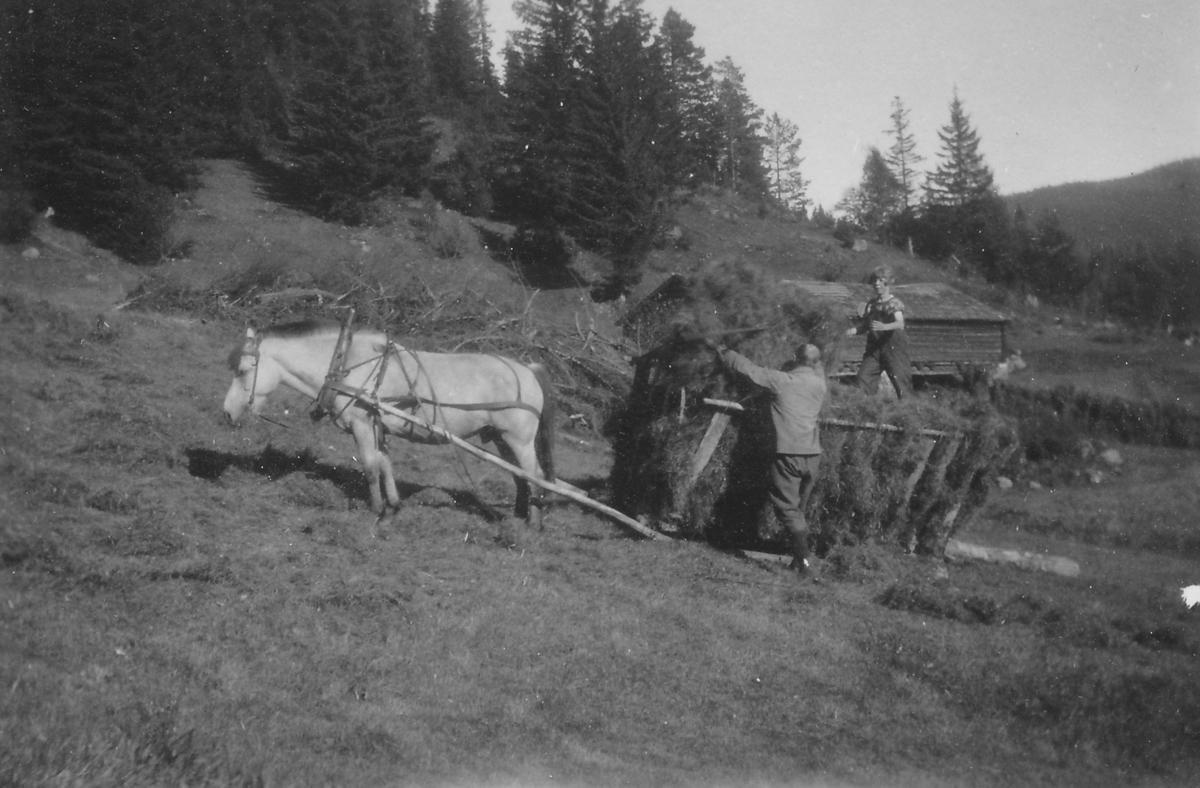 Kjøring av høy med hest på Fjøddi