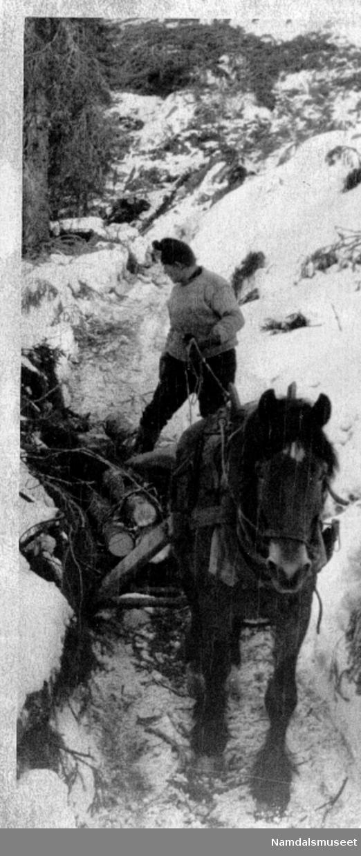Skogsarbeid. M-tinnsag som ble brukt av 2 mann.