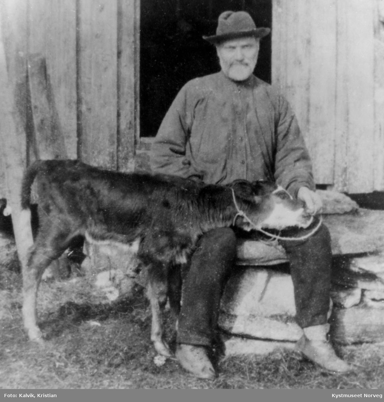 Petter Kalvik sammen med en kalv  på småbruket i Kalvika