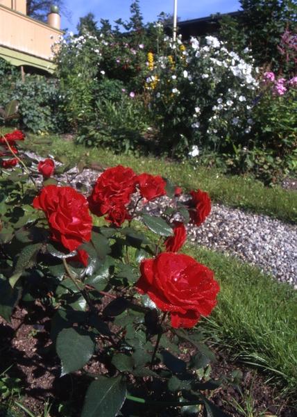 sende blomster bergen møre og romsdal