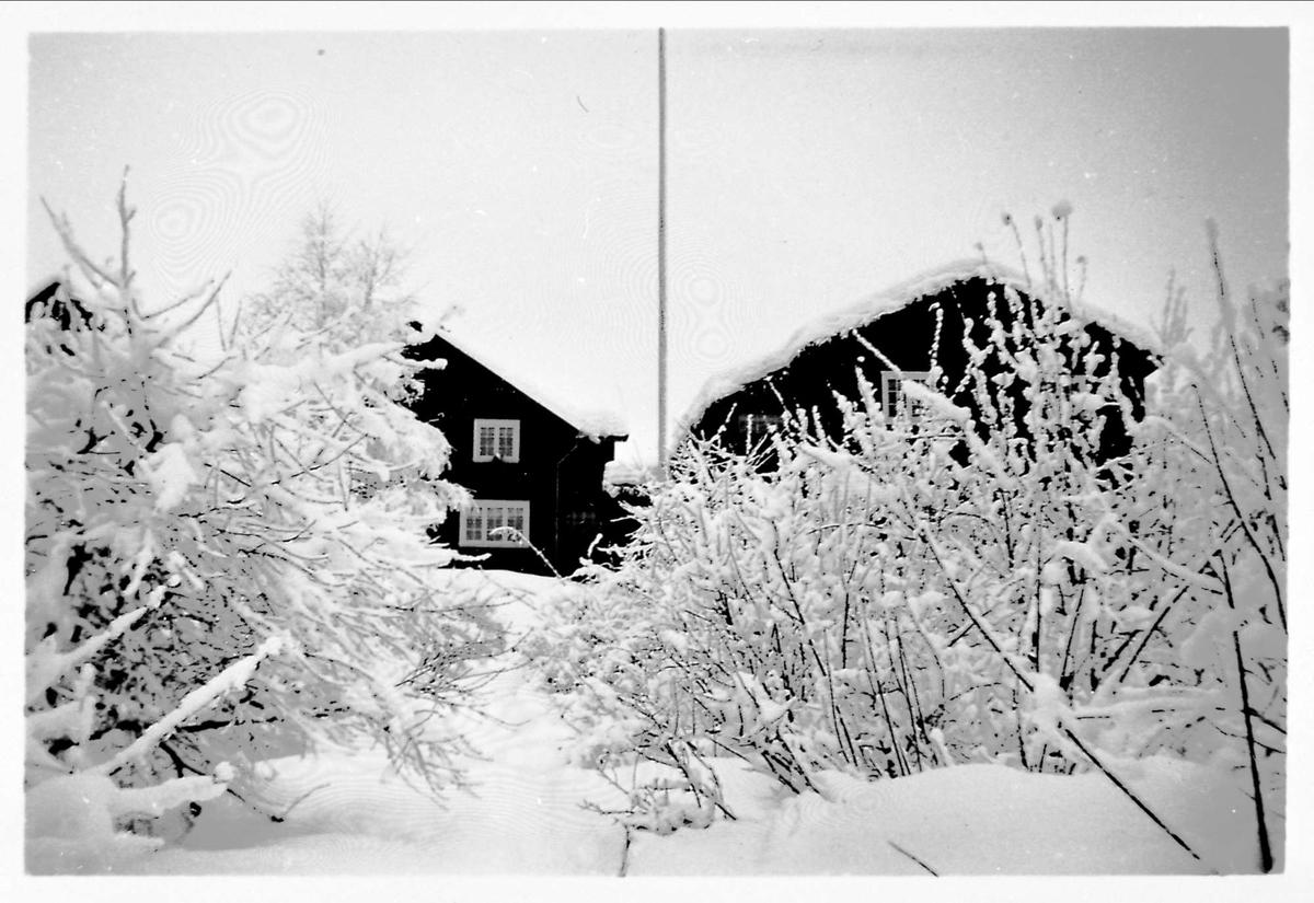 Hus, snø, hage,