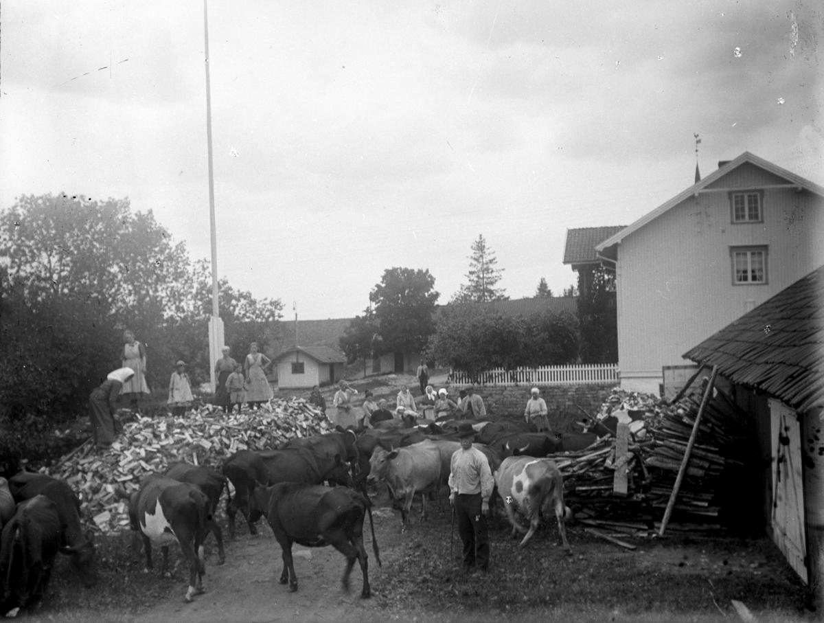 Masse mennesker og kyr på en gårdsplass. Kuslipp, vedhaug.