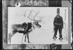 Samisk mann med kjørerein i vinterlandskap. Reproduksjon av