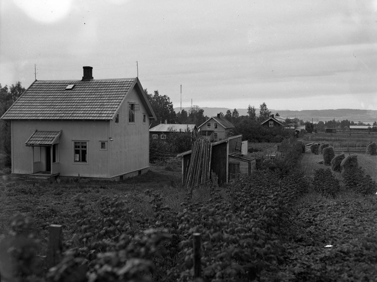 Villabebyggelse på Storhamar?, Ukjent. Foto Normann 14. 09. 1946. Foto for Arbeiderbladet, Oslo